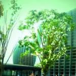 10-国立新美術館
