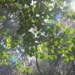 478-木漏れ日