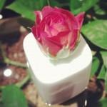 option flower